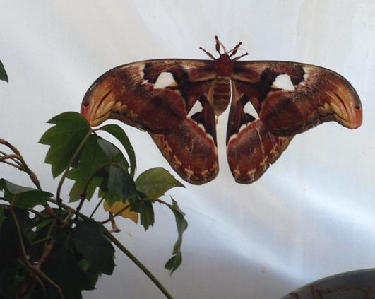 fluture1