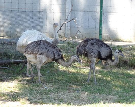 zoo_03045