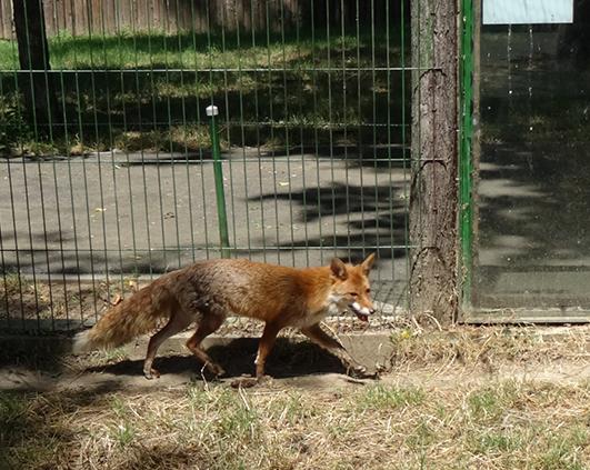 zoo_03074