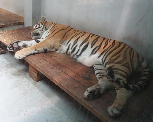zoo_03080