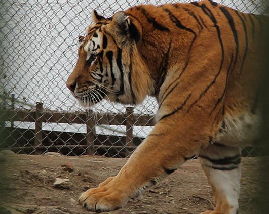 zoo_0009_IMG_5357