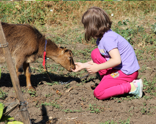 cu capra