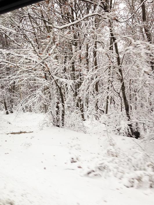 iarna1