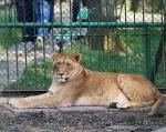 zoo_0000