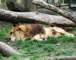 zoo_0021