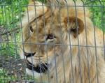 zoo_0022