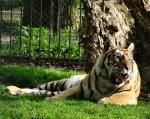 zoo_0029