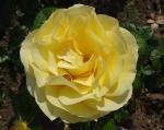 trandafiri_0023_20170603-DSC06162